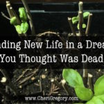 Finding New Life in a Dream You Thought Was Dead